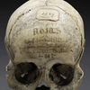 "The skull of ""Rojos"""