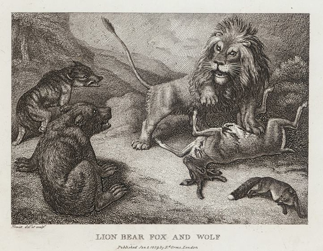 Lion, Bear, Fox and Wolf