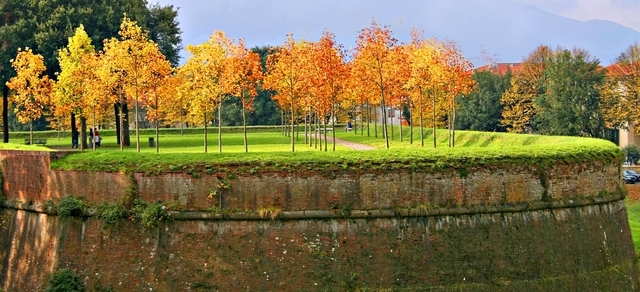 Autumn trees in Lucca