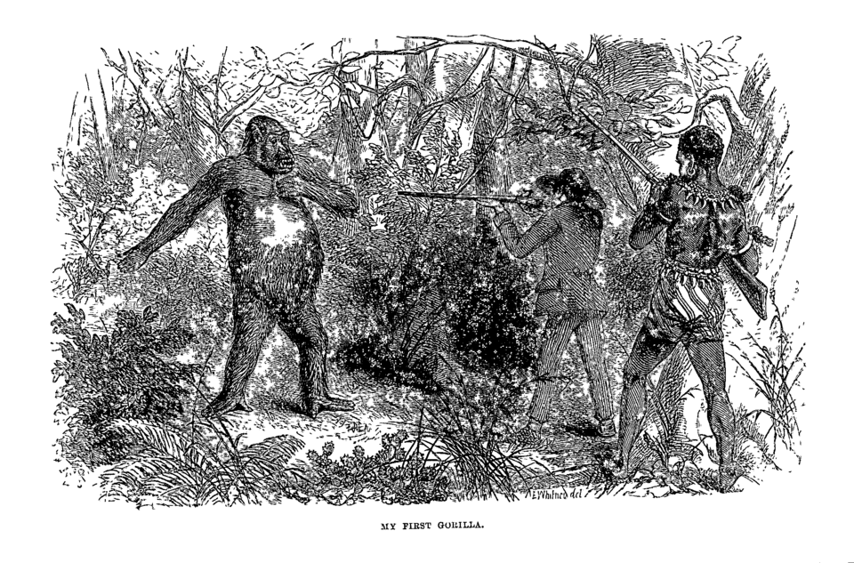 Hunting Gorillas in the Land of Cannibals  Making Victorian Field ... ee52063305