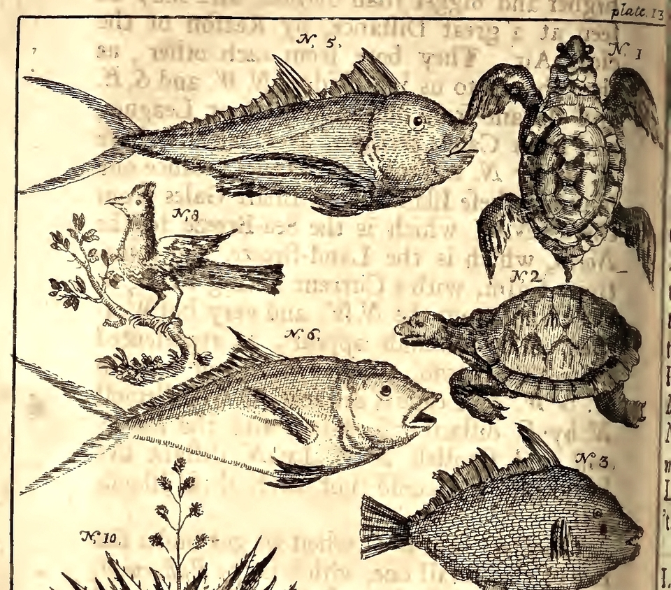 Amazons, Pirates, and Turtles on the Island of California